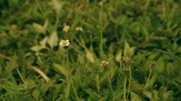 emilie-bombita-work-in-progress-tiny-flower