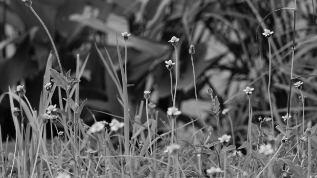 emilie-bombita-work-in-progress-flowers-in-macro